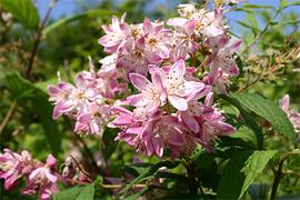 Ihre wunderschönen Blüten sind bei weitem nicht ihr einziger Vorzug, nehmen Sie sich ein wenig Zeit, um die Stärken von Magnolien, Ginster, Zaubernüssen und anderen Prachtstücken kennenzulernen.