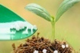 Optimale Dünger & Erden sorgen für die Grundlage, die Pflanzen für ein kräftiges & gesundes Wachstum benötigen. Produkte zur Bodenvorbereitung & -verbesserung, effektive Dünger, die den Gartenpflanzen wichtigste Nährstoffe liefern.