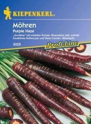 M�hre 'Purple Haze' - Kiepenkerl �