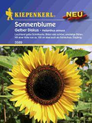 Sonnenblume ' Gelber Diskus' - Kiepenkerl �