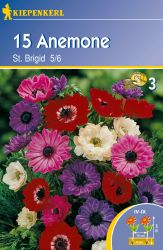 Anemone 'St. Brigid' - Kiepenkerl �
