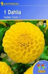 Dahlia 'Golden Torch' - Kiepenkerl �