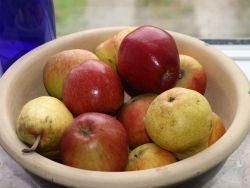 Minist�mmchen Apfel 'Braeburn' - Malus 'Braeburn'