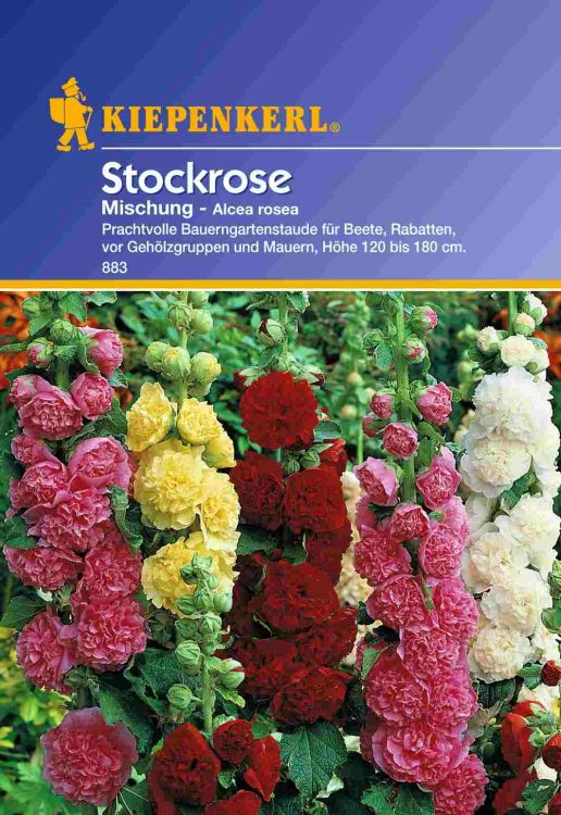 alcea rosea stockrose mischung kiepenkerl baumschule horstmann. Black Bedroom Furniture Sets. Home Design Ideas
