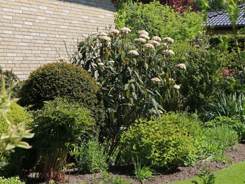 Photinia Hecke Red Robin Garten Pinterest Gärten Gartenstr?ucher ...