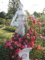 Kletterrose 'Bajazzo' � - Rosa 'Bajazzo' � ADR-Rose